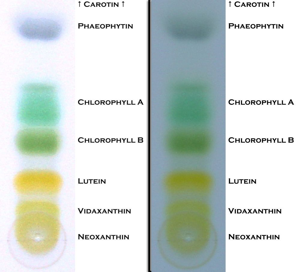 an analysis of samples using thin layer chromatography and gas chromatography In paper and thin-layer chromatography the mobile phase is the solvent  both  these kinds of chromatography use capillary action to move the solvent through   these gc analyses are done rather quickly (1 to 15 minutes per sample) and .